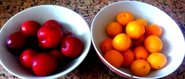 Washed fresh Apricots and Plums